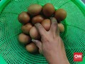 Harga Telur Melonjak, Minat Beli Masyarakat Tak Surut