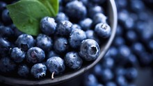 Cara Mudah Menanam dan Merawat Blueberry dengan Pot