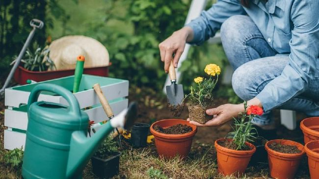 Jacob Sebastian Björk seorang binaraga Swedia pindah kewarganegaraan menjadi orang Jepang dan memilih berkarier jadi seorang tukang kebun.