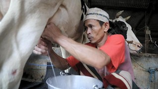 Saring dan Sapi Perah Jakarta