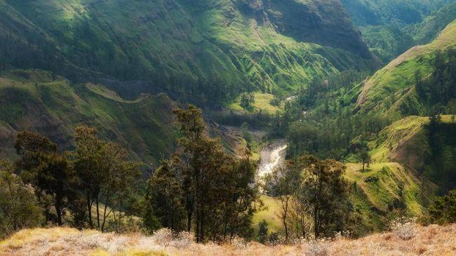 Ada empat jalur pendakian resmi yang ditetapkan oleh pengelola Gunung Rinjani. Jalur Torean bukan salah satunya.