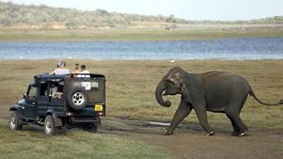 9 Alasan Berkunjung ke Sri Lanka