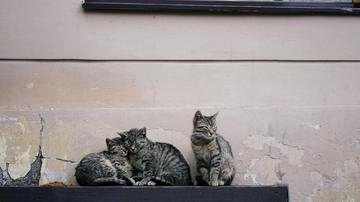 Menimbang Komitmen Dan Biaya Perawatan Kucing