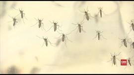 VIDEO: Peneliti Temukan Hubungan Zika dan Kecacatan Lahir