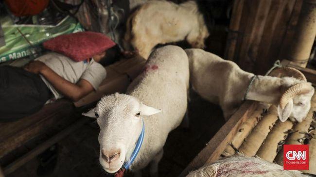 Sebanyak 24 kambing di kawasan Rawa Buaya hilang. Pelaku pencurian diduga menyembelih kambing-kambing tersebut di lokasi dan hanya meninggalkan jeroan.