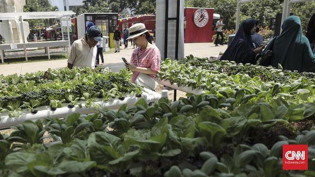 Simorejo mendapat julukan Kampung Hidroponik karena hampir semua warganya memanfaatkan lahan yang terbatas di rumah untuk budidaya tanaman hidroponik.
