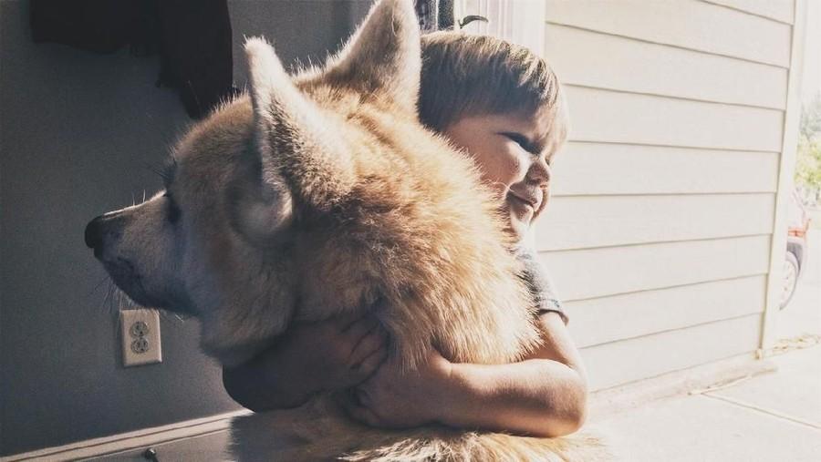 Kisah Seorang Balita yang Nyawanya Diselamatkan Seekor Anjing