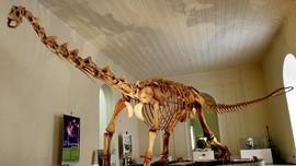 Studi: 2,5 Miliar Dinosaurus T-Rex Pernah Hidup di Bumi