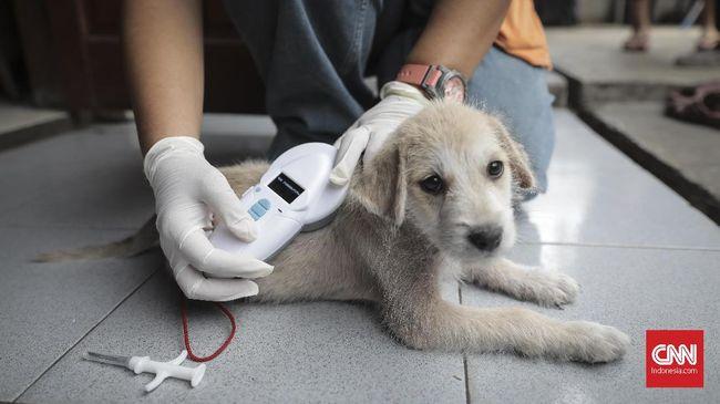 Dinas Ketahanan Pangan, Kelautan, dan Pertanian (KPKP) DKI Jakarta memberi 500 microchip gratis yang berfungsi merekam identitas anjing.