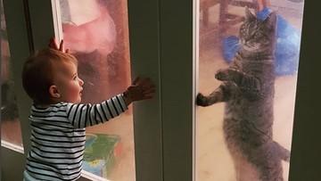 Lucu Deh, Saat Anak Punya Chemistry dengan Kucing Peliharaan