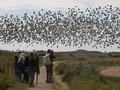 'Menyelami' Kegiatan Pengamatan Burung di Alam Liar