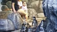 <p>Bermain bersama pinguin dengan Richard dan Richelle. [Foto: Instagram @hendrasansan]</p>