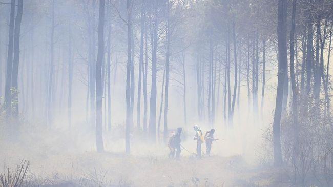 Eksekusi PT Merbau Pelalawan Lestari jadi kewenangan PN Pekanbaru, Riau. Perusahaan itu dihukum MA membayar Rp16,2 triliun karena merusak hutan di Riau.
