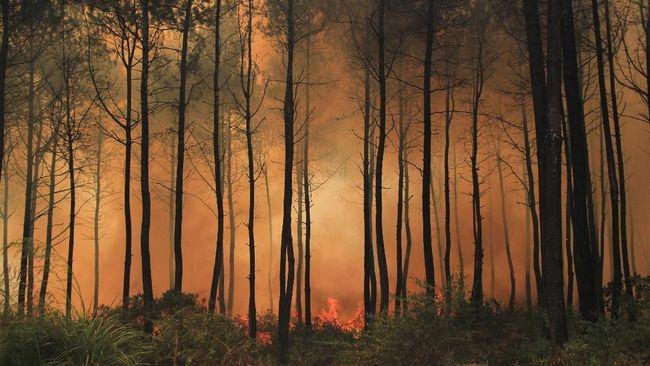 LAPAN: Gunung Ciremai Dominasi Jumlah Titik Api di Jawa Barat