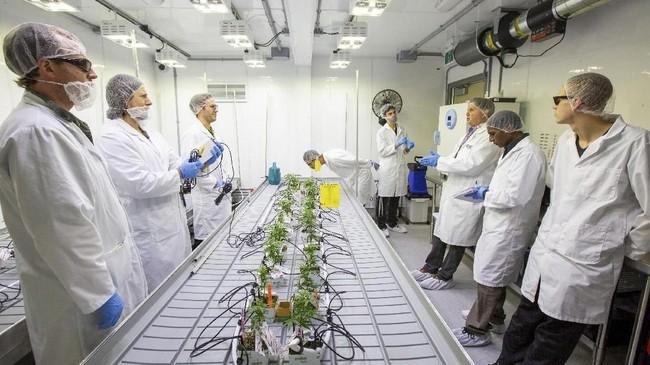 Sebanyak 24 siswa diberikan mandat untuk menjadi yang pertama menanam dan merawat ganja di Kanada. (REUTERS/Carlos Osorio)