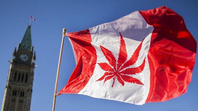 Ratusan orang mengantre sejak dini hari untuk membeli ganja saat hari pertama pemerintah Kanada resmi melegalkan peredaran ganja.