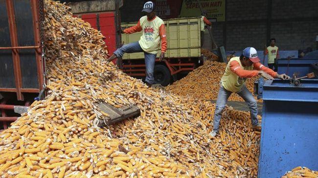 Perum Bulog mengantongi izin impor jagung sebanyak 30 ribu ton dari Kementerian Perdagangan (Kemendag) pada hari ini, Kamis (10/1).
