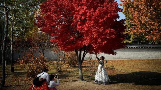 Suasana romantis sangat terasa saat musim gugur di kota Seoul, Korea Selatan.