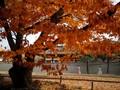 FOTO: Rona Seoul di Musim Gugur