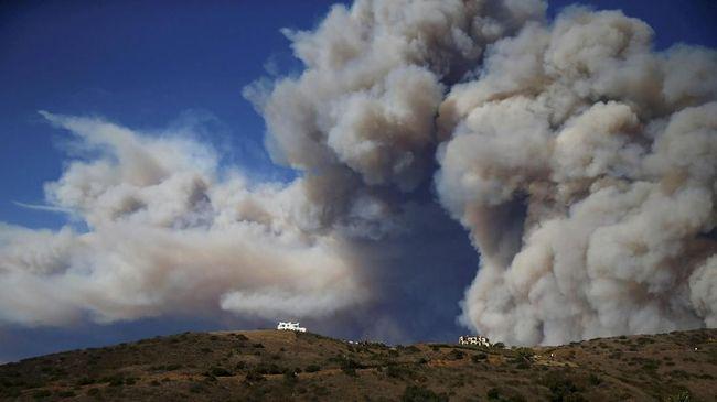 Hektaran kawasan hutan di wilayah Irkutsk, Siberia, Rusia, diduga dibakar para pembalak liar untuk menutupi kegiatan ilegal mereka.