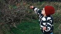 <p>Asyik! Alita sedang memetik rosehip yang sedang hits itu lho. Ternyata nggak jauh dari belakang rumah Morfar-nya Alita ada pohon rosehip. (Foto: Instagram/ @alicenorin)</p>