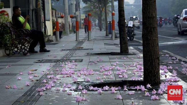 Fenomena bunga tabebuya bikin ruang terbuka Surabaya digemari jadi objek swafoto warga. Tabebuya dikembangkan oleh pemerintah kota.