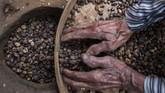 Aroma wangi menyebar ke seluruh jalan di desa Gombengsari, Banyuwangi. Bunyi sangrai dan tumbukan biji kopi terdengar seperti lantunan nada.