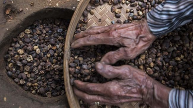 RI akan menjajakan sarang burung walet dan kopi di pameran dagang di China, pada 5-10 November 2019. Pameran dagang untuk mengerek ekspor RI ke China.