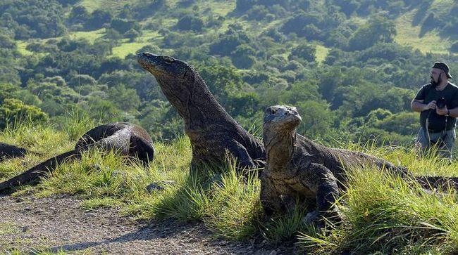Gubernur NTT diminta untuk memperbaiki infrastruktur Pulau Komodo terkait dengan rencana kenaikan harga tiket di tempat wisata tersebut.