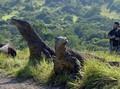 Gubernur Diminta Perbaiki Infrastruktur Pulau Komodo