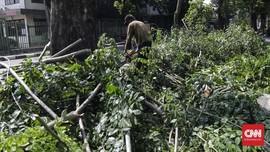 Pohon-pohon Tumbang di Blitar, Belasan Rumah Warga Tertimpa