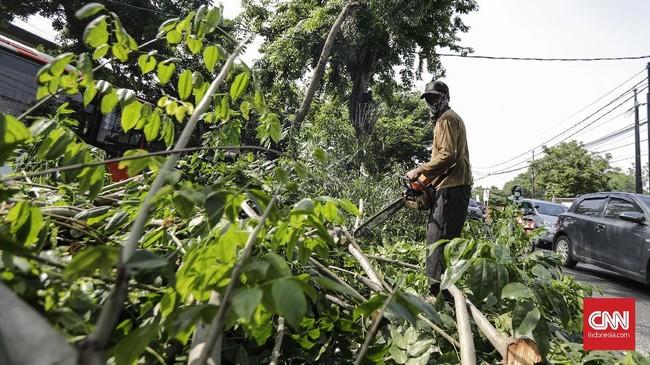 Pohon Tumbang di Pamulang Tutup Separuh Badan Jalan