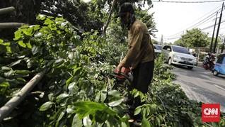 Hujan Lebat, Ojol Tewas Tertimpa Pohon Tumbang di Kebon Jeruk