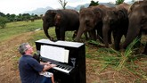 Musik klasik tak hanya memberikan efek menenangkan bagi manusia, tetapi juga para gajah tua di Elephants World, tempat perlindungan bagi hewan di Thailand.