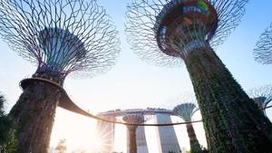 Singapura Prediksi Pandemi Covid Pulih dalam 4-5 Tahun