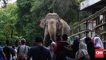 Raden Saleh, Cikini 73 dan Asal Muasal Kebun Binatang Ragunan