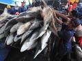 Nelayan Tagih Janji 'Bulog' Perikanan ke Jokowi