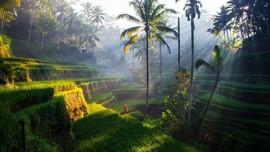 Menilik Kelola Sampah Makanan dan Serbuan Turis di Ubud