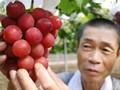 Harga Fantastis untuk Anggur Termahal di Dunia