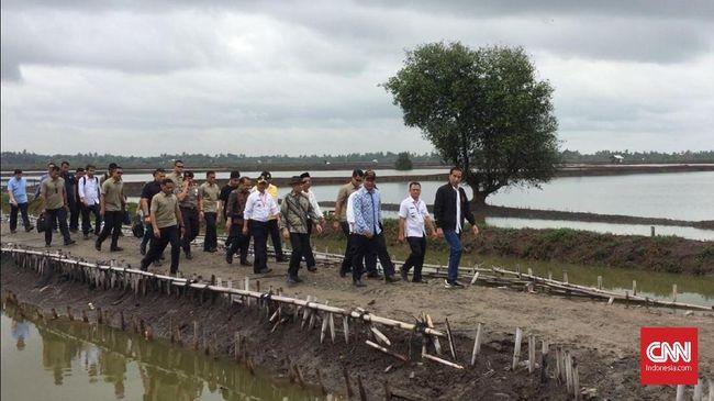 Bukan hanya meninju panen udang vaname di Bekasi, Jawa Barat. Jokowi juga turut menarik jala nelayan yang memanen udang sehingga tangannya terkena patil udang.
