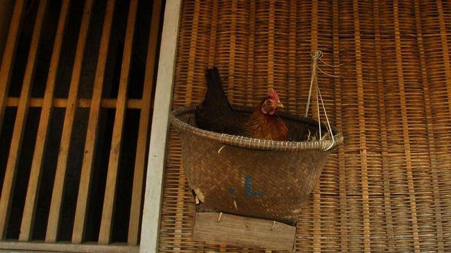 Kepala Staf Presiden Moeldoko menyebut dengan memelihara ayam, gizi anak bisa dipenuhi melalui telur ayam yang ditetaskan.
