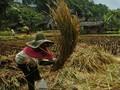 FOTO: Lestari Tradisi di Kampung Adat Naga