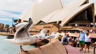 Klaster Hotel Australia Kembali Catat Tambahan Kasus Corona