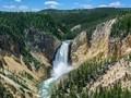 Turis Jatuh usai Nekat Kunjungi Yellowstone saat Pandemi
