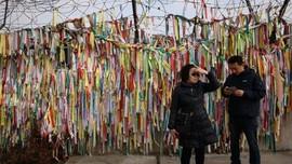 FOTO: Imlek Sunyi di Zona Demiliterisasi Korea