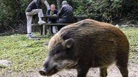Pelaku Sebut Isu Babi Ngepet demi Tenangkan Warga Hilang Uang
