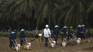 Kutukan Raja Sawit di Era SBY hingga Jokowi