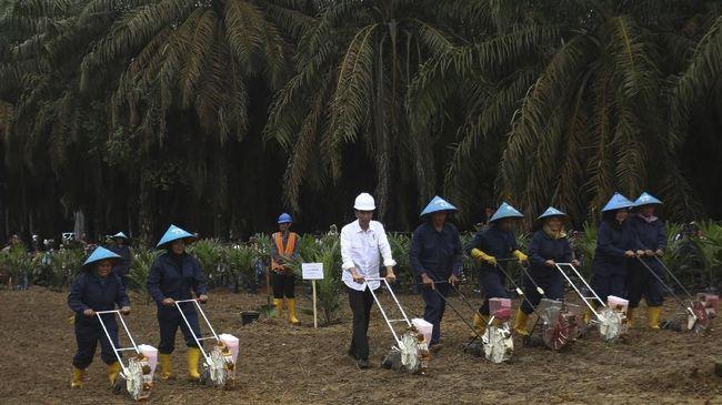 Wakil warga sejumlah desa di Muaro Jambi, Budiman mengatakan saat Jokowi mengklaim tak ada konflik lahan, pihaknya sedang protes penguasaan lahan di Jambi.