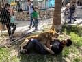 Hewan-hewan di Kebun Binatang Gaza Mendapat Rumah Baru