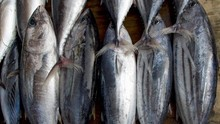 KKP: Larangan Produk Laut ke China Hanya dari Satu Eksportir